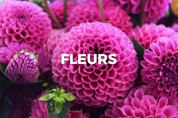 Découvrez l'assortiment de fleurs de Bloomer !