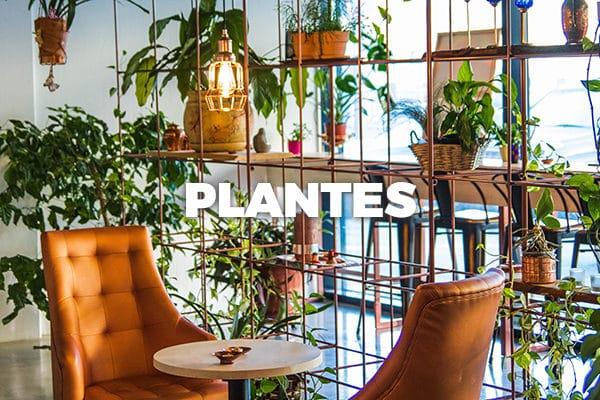 Découvrez l'assortiment de plantes de Bloomer !